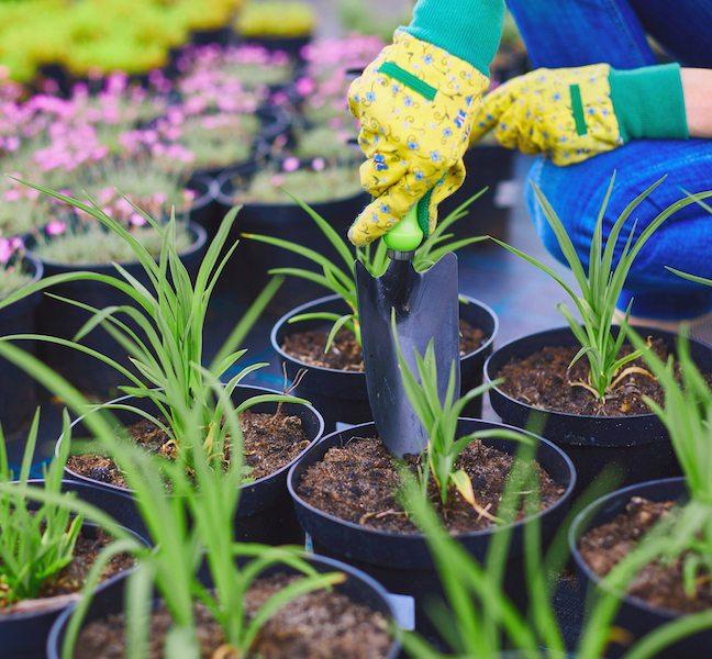 De Groene Verzekering Duurzaam Groen Maatschappelijk Verantwoord